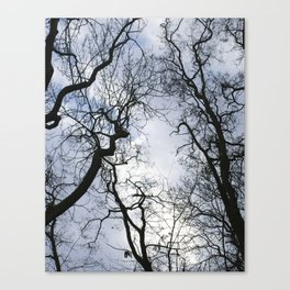 Branches of trees Canvas Print