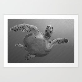 Sea Turtle Line Pattern In Black And White Art Print