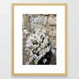 English Garden - Flowers from Stone Framed Art Print