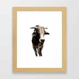 Indian Cow India Framed Art Print