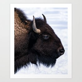Bison in the Snow Art Print
