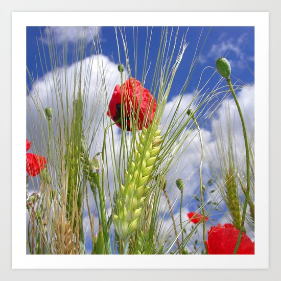 cornfield poppy I Art Print