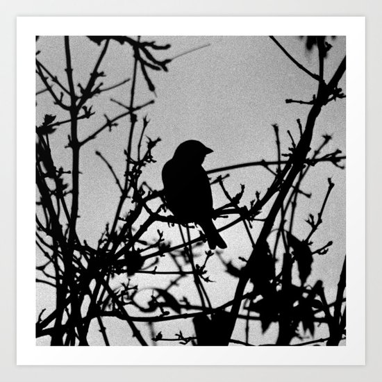 Silhouette Bird.  Art Print