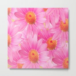 Bunch of pink daisy flowers - a fresh summer feel in pink color Metal Print