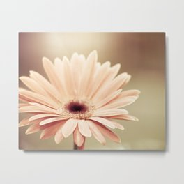 Peach Daisy Flower Photography, Brown Nature Floral Botanical Photo Metal Print