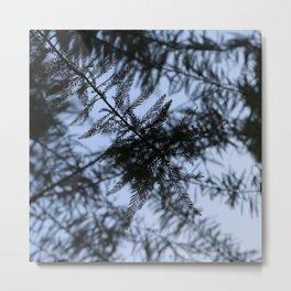 bald cypress 05 Metal Print