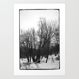 Norwegian forest VI Art Print