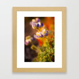 Calfornia Blooming Framed Art Print