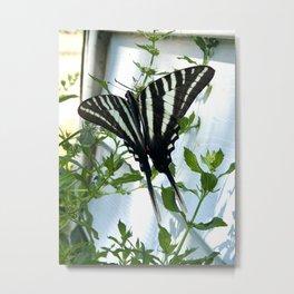 Weston Zebra Metal Print