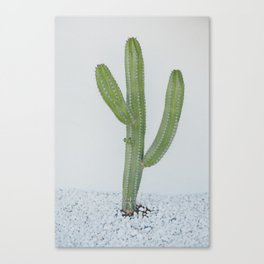 Cactus Life Canvas Print