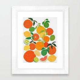 Citrus Harvest Framed Art Print