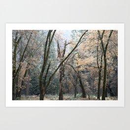 Winter Blossoms Art Print