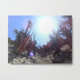 Ancient bristlecone pine forest Metal Print