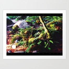 Fern & Rocks Art Print