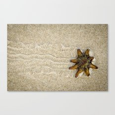 Starfish on the Move Canvas Print