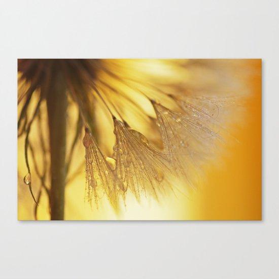 Dandelion Light Canvas Print