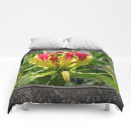 Gloriosa Rothschelidiana Comforters