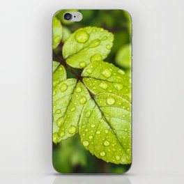 Plant Patterns - Green Scene iPhone Skin
