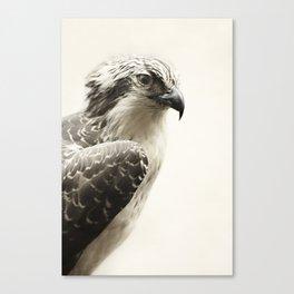 Hawk   Fig .03 Canvas Print