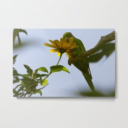 Birds from Pantanal Periquito-de-encontro-amarelo Metal Print