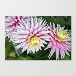 Dahlia / In The Garden / 11 Canvas Print