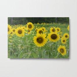 Beeutiful sunflowers Metal Print