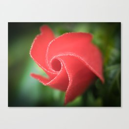 Twirly red flower petals Canvas Print