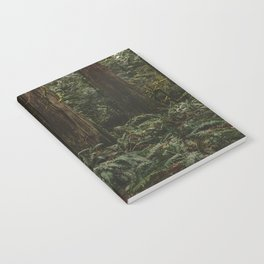 Old growth forest Notebook