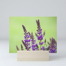 Salvia Flowers 7 Mini Art Print