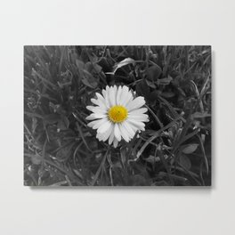 The Lone Daisy. Metal Print