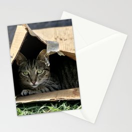 Sad Box Kitty (Lanai Cat's Sanctuary) Stationery Cards
