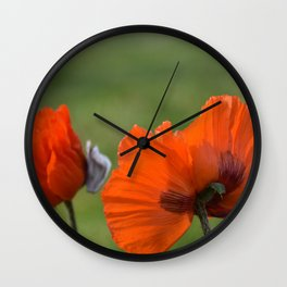 PRETTY POPPIES IN THE LATE AFTERNOON SPRING SUNSHINE Wall Clock