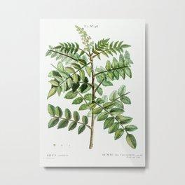 Sicilian sumac (Rhus coriaria) from Traité des Arbres et Arbustes que l'on cultive en France en plei Metal Print