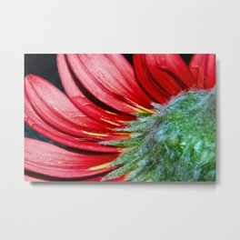 Red Gerbera Flower Metal Print