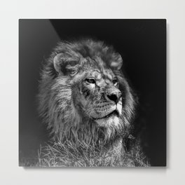 Proud Young Lion Metal Print