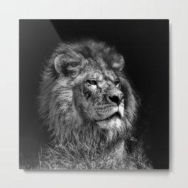 Proud Young Lion Metal Print