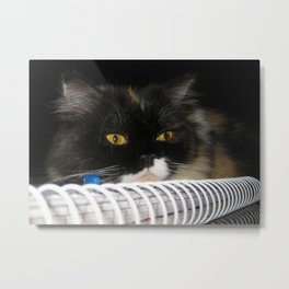 Cat Wanna Study Metal Print