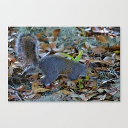 Searching For Food Canvas Print