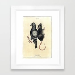 Pigeon-Rat (Columba livia-Rattus) Framed Art Print