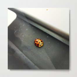 The Lonely Ladybug Metal Print
