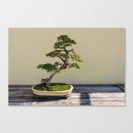 Bonsai Bonanza Canvas Print