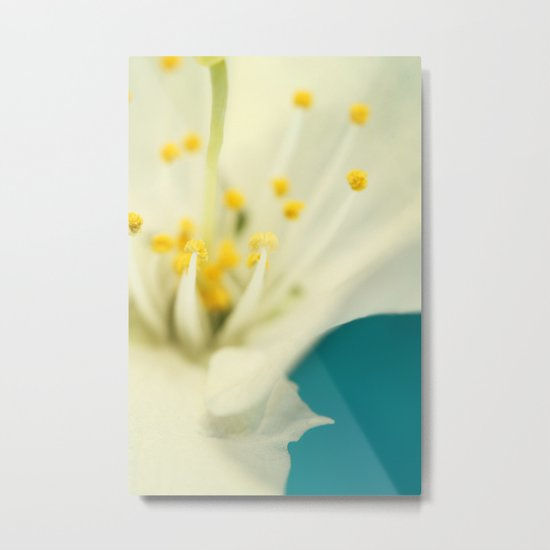 Blossom White Against Blue Metal Print