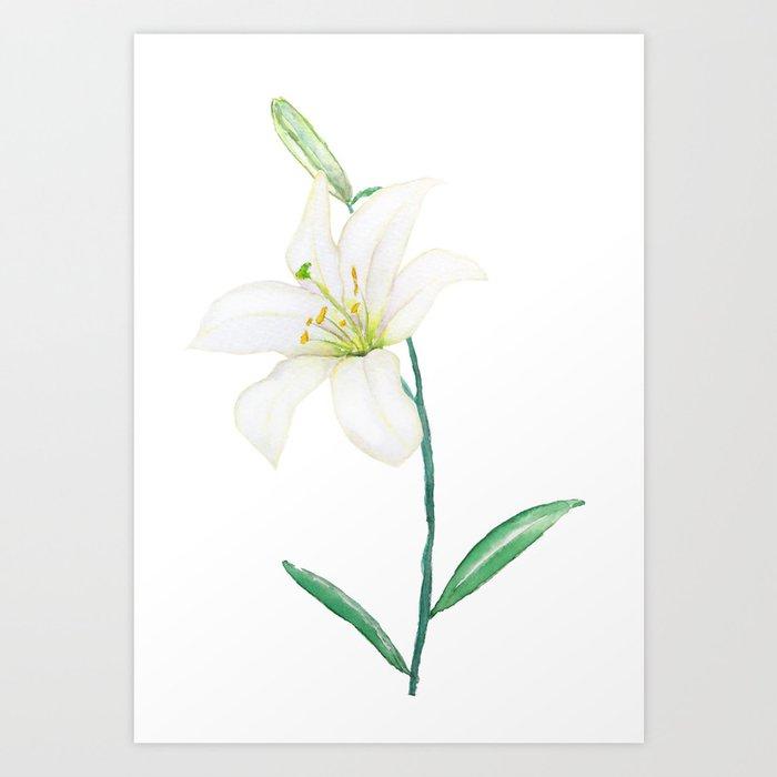white lily watercolor Art Print