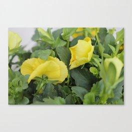 Flower Fridays Canvas Print
