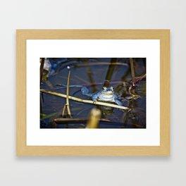 Blue Frogs 06 - Rana arvalis Framed Art Print