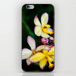 Pretty Plumeria, Hawaii's Flower iPhone Skin