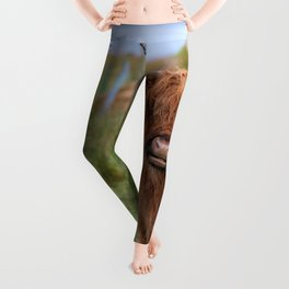 Long haired Highland cattle - Highland cow, Highlander, Heilan coo - Thurso, The Highlands, Scotland Leggings