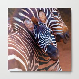Two Zebras Playing With Each Other Metal Print