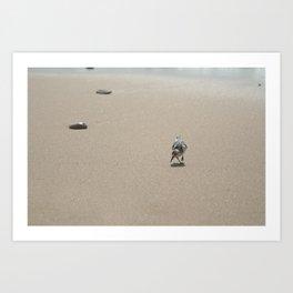 Sandpiper bird on wet sand Art Print