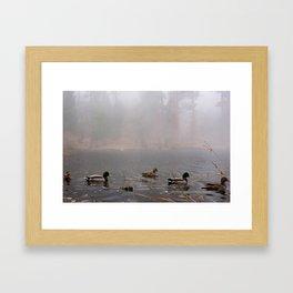 Fog Ducks Framed Art Print